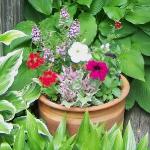 garden-flowers-mix-in-container8-1.jpg