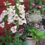 garden-flowers-mix-in-container8-3.jpg