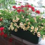garden-flowers-mix-in-container8-6.jpg