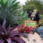 garden-inspiration-by-gabriel-succulent12.jpg