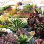 garden-inspiration-by-gabriel-succulent14.jpg