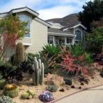 garden-inspiration-by-gabriel-succulent15.jpg