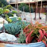 garden-inspiration-by-gabriel-succulent5.jpg