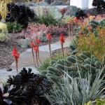 garden-inspiration-by-gabriel-succulent7.jpg
