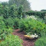 garden-path-ideas8.jpg