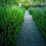 garden-path-ideas55.jpg