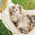 hammock-in-garden1-2.jpg