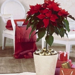 home-flowers-in-new-year-decorating1-12.jpg