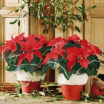home-flowers-in-new-year-decorating1-5.jpg