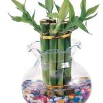 home-plants-creative-ideas1-3.jpg