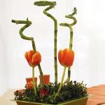 home-plants-creative-ideas1-6.jpg
