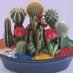 home-plants-creative-ideas2-3.jpg