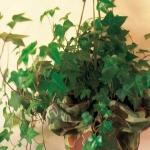 home-plants-creative-ideas3-1.jpg