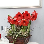 home-plants-creative-ideas4-7.jpg