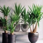 home-plants-creative-ideas5-3.jpg