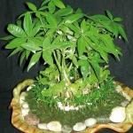 home-plants-creative-ideas5-5.jpg