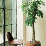 home-plants-creative-ideas5-6.jpg