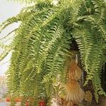 home-plants-creative-ideas5-7.jpg