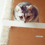 ikea-furniture-hacks-for-cats1-9