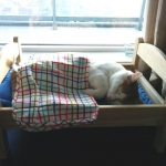ikea-furniture-hacks-for-cats6-1