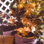 outdoor-decorative-lighting2-3.jpg