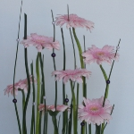 pink-gerbera-diy-easy-floristics3-5.jpg