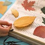 press-leaf-project7-2.jpg