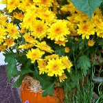 pumpkins-vase-new-floral-ideas6-3-3.jpg