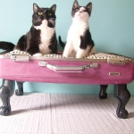 recycled-suitcase-ideas-pets-bed3.jpg