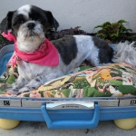 recycled-suitcase-ideas-pets-bed4.jpg