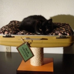 recycled-suitcase-ideas-pets-bed8.jpg