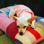recycled-sweater-pillows-pet-bed1.jpg