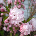 romantic-porch-show-tour-in-garden7.jpg