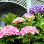 romantic-porch-show-tour-in-garden9.jpg