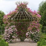 roses-in-parks1.jpg