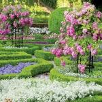 roses-in-parks3.jpg