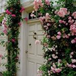 roses-in-garden-entrance1.jpg