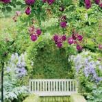 roses-in-garden-archway5.jpg