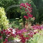 roses-in-garden-archway6.jpg
