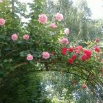 roses-in-garden-inspiration1-2.jpg