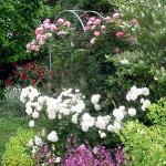 roses-in-garden-inspiration1-3.jpg