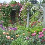 roses-in-garden-inspiration1-6.jpg