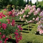 roses-in-garden-inspiration3-2.jpg