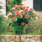 roses-in-garden-inspiration3-3.jpg
