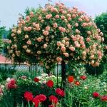 roses-in-garden-inspiration3-4.jpg