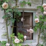 roses-in-garden-inspiration4-1.jpg