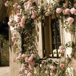 roses-in-garden-inspiration4-2.jpg