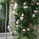 roses-in-garden-inspiration4-3.jpg
