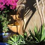 santa-cruz-landscape-designer3-6.jpg