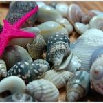 seashells-decor-ideas-easy11.jpg